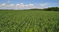 Indiana farmland = peace, love, happiness