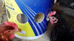 Comedero económico para gallinas (sin desperdicio de comida)/Cheap hen feeder (without food waste) - YouTube