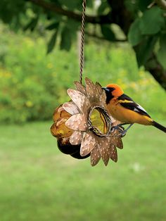 Oriole Jelly Bird Feeder | Gardener's Supply ~ Exclusive | Jelly Feeder for Colorful Orioles  Attract orioles to your landscape Glass feeder is a colorful garden accent Easy to fill, easy to clean Handsome orange-and-black orioles have a sweet tooth and love to eat jelly. Simply spoon some grape jelly into the orange glass bowl, top with the metal flower, and hang from a branch. Birds will alight on the perch to feed.
