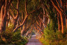The Dark Hedges, Ballymoney, County Antrim, Northern Ireland