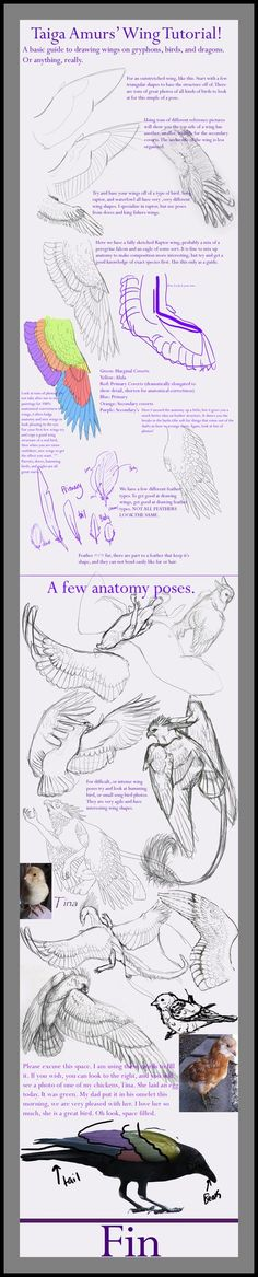 Wing Tutorial by SunStateGalleries on DeviantArt