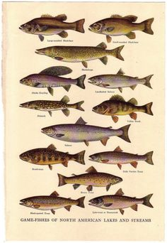 750 best Scientific Illustration images on Pinterest in 2018 | Fish ...