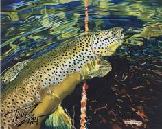 """Brown Sugar"" Colored pencil drawing of a German Brown Trout by Travis J.Sylvester.  Reference photo courtesy of ""Bryan Huskey"""
