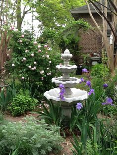 Iris and roses in the herb garden