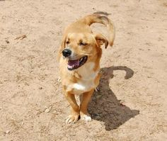 I found Stumpy using the LabradorFinder app from Labradors.com. Wouldn't it be great to find Stumpy a furever home?