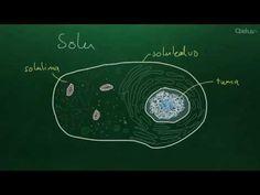 Ihmisen biologia (yläkoulu)