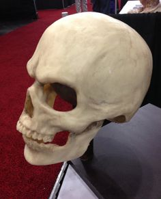 comfortable realistic Skull mask in bone by HighNoonCreations, $130.00