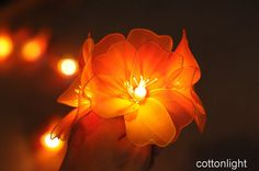 20 handmade orange Nylon Rose floral Flower LED by cottonlight -hang behind bride and groom's chairs/table at reception Nylon Flowers, Floral Flowers, Reception Decorations, Light Decorations, Cotton Ball Lights, Light Table, Table Lighting, Wedding Lanterns, Orange Roses