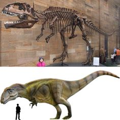 Giganotosaurus: as the name implies, a giant dinosaur. One of the largest therapods to walk the earth, next to Carcharadontosaurus and Spinosaurus.