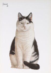 Postkaarten Zipper zittend Francien Westering, van C6053 Postkaarten, Tekeningen, Dieren, Katten,