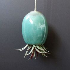 Mudpuppy: Air Plant Pod Large Blue Green, at 38% off!