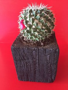 Shou sugi ban charred wood planters by cuspinerascrafts on Etsy