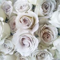 Earl grey rose                                                                                                                                                                                 More
