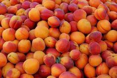 Apricot are amazing fruit - historical story Animal Crossing, Orange Aesthetic, Orange You Glad, Tumblr, Just Peachy, Fresh Fruit, Orange Color, We Heart It, Heart Eyes
