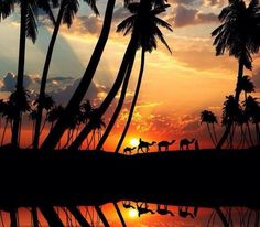 Pakistan Camels at Sunset ~ via Travel This World Beautiful World, Beautiful Places, Beautiful Pictures, Beautiful Sunset, Amazing Sunsets, Photo Twitter, Costa, Silhouette Photography, Wanderlust