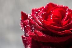 beautiful red pictures - Google Search