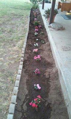 Impatiens in the.front