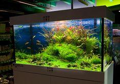 The Aquatic Plant Society – Oliver Knott, Aquascaper!