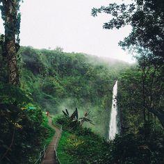 akaka falls state park, hawaii // unreal hawaii