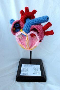 Crocheted Anatomically Correct Heart Model
