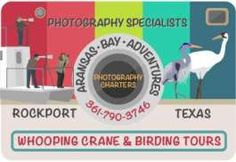 The Ultimate Photography Tours: Whooping Cranes, Lighthouse, Dolphins and Sunsets! Rockport Beach, Migratory Birds, Photography Tours, Corpus Christi, Crane, Dolphins, Sunsets, Lighthouse, Bell Rock Lighthouse