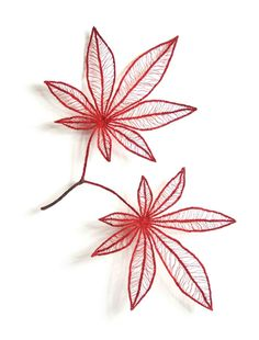 Meredith Woolnough:Maple-leaves