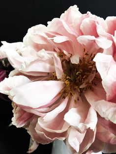 We are now offering some of my favorite peony pictures as prints in the shop. Each piece is signed, numbered and ready for framing. I am excited to share them