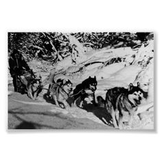 USA Alaska dog sled racing 1970s photography - Download this photo in HD $30 - https://gumroad.com/l/nMRo