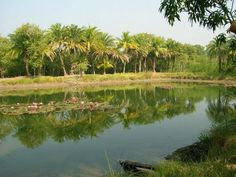 The pond of my friend's dad, in their village.