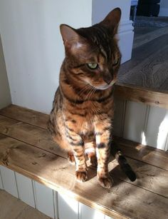 Wallace has found a small patch of sunlight to sit in, and why not?