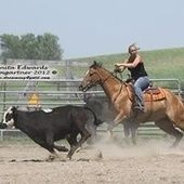 Cow horse deluxe!!!! Quarter Horse for sale in Silver lake, Mn :: HorseClicks