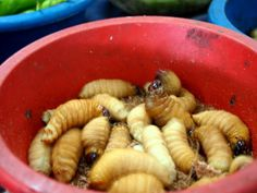 23 Best SIBU images in 2014   Sibu, Borneo, Malaysia