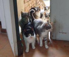 Gatti di Campagna - Chiusi (Toscana)