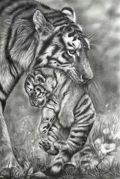 Animal pencil drawings, drawing with pencil, pencil drawing tutorials Realistic Animal Drawings, Pencil Drawings Of Animals, Animal Sketches, Art Drawings Sketches, Cool Drawings, Drawing Animals, Eye Drawings, Pencil Drawing Images, Tiger Drawing