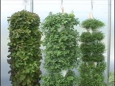 Hydroponics - Vertical Towers