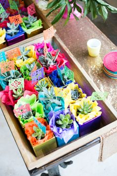 Colorful succulent favors: http://www.stylemepretty.com/living/2016/05/04/two-party-tricks-for-the-ultimate-fiesta-pool-garland-and-tequila/ | Photography: Esther Louise - http://estherlouise.com/