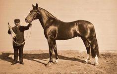 ЛАКОМЫЙ 1893