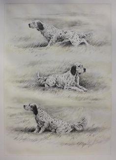 Etude, setter à l'arrêt de Dominique Pizon Hunting Art, Hunting Dogs, Hunting Drawings, Dog Drawings, English Setter Puppies, English Setters, Colored Pencil Tutorial, Group Of Dogs, Irish Setter