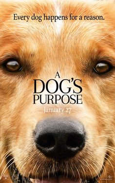 """W. Bruce Cameron's """"A Dog's Purpose""""  is a heart warming tale about the bond between man and dog. See it in theaters on January 27th"""