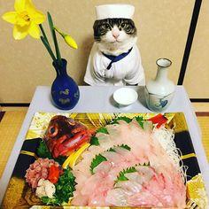 コスプレ猫のマロさんが料理を紹介するInstagram