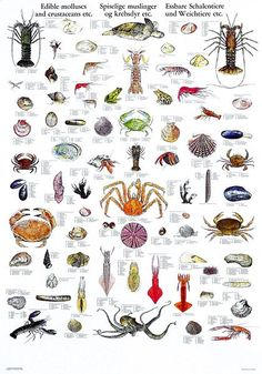 Unique poster with edible molluscs, crustaceans etc. Average size of each species is indicated. Detailed and lifelike illustrations. Unique Poster, All Poster, Fish Chart, Types Of Fish, Sea Fish, Saltwater Fishing, Fauna, Sea Creatures, Vintage Posters