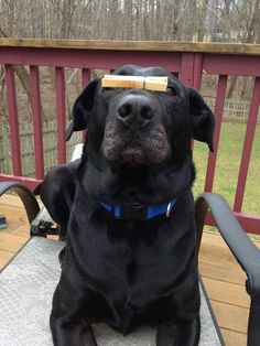 You can put a clothespin on your nose...but sometimes things still stink...
