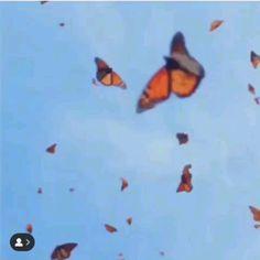 Badass Aesthetic, Music Aesthetic, Aesthetic Movies, Aesthetic Images, Retro Aesthetic, Aesthetic Videos, Orange Aesthetic, Aesthetic Pastel Wallpaper, Cute Wallpaper Backgrounds