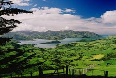 Akaroa, New Zealand. Home of the world's smallest dolphins, the Hector dolphin.