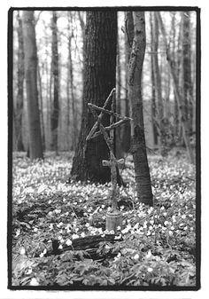 Hainich NP Frühling