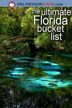 17 Fascinating Spots In Florida That Are Straight Out Of A F.- 17 Fascinating Spots In Florida That Are Straight Out Of A Fairy Tale This picture of Fern Hammock Springs in Ocala National Forest is aglow with ethereal beauty. Florida Vacation, Florida Travel, Vacation Spots, Florida Usa, Florida Camping, Vacation Rentals, Vacation Places, Florida West Coast Beaches, Venice Florida