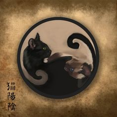 144 Best Yin Yang Cats Images In 2019 Illustrations Cats Drawings