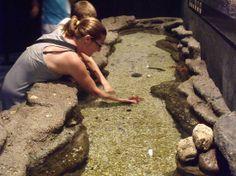 Roquetas de Mar Aquarium: tocando estrellas de mar Roquetas de Mar, Almería #RoquetasdeMar #Andalusia #Andalucia #Spain #EspañaTurismo #TourismSpain