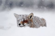These 22 Photos Will Make You Fall In Love With Foxes | The Mind Unleashed