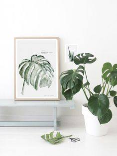 Monstera print from Urban Botanic collection by My Deer Art Shop Monstera Deliciosa, Philodendron Monstera, Indoor Garden, Indoor Plants, Elephant Poster, Ficus Elastica, Turbulence Deco, Deer Art, Tropical Leaves